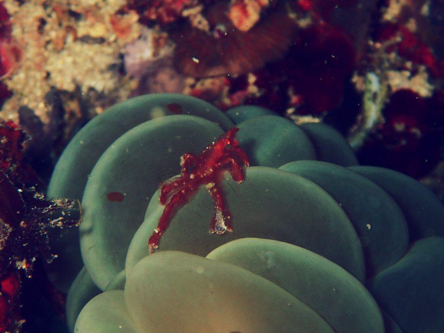 オランゴ島ダイビング_28