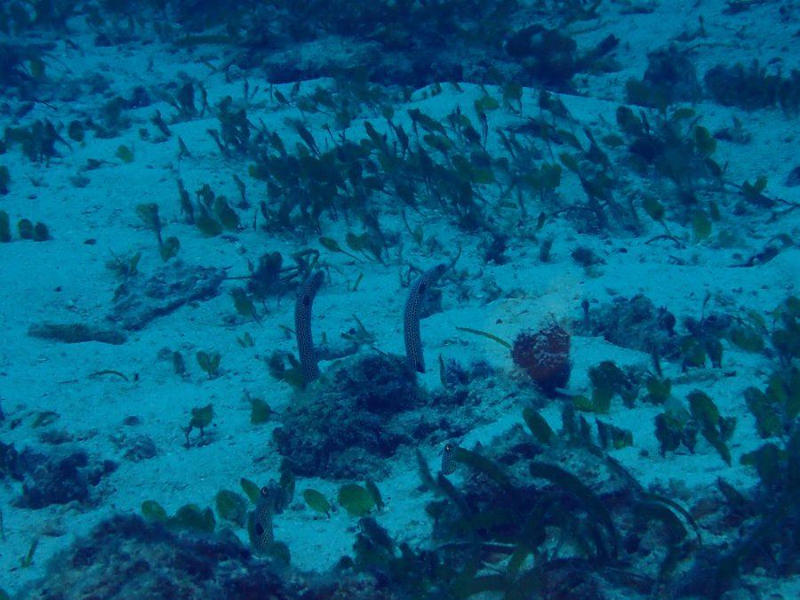 オランゴ島ダイビング_42