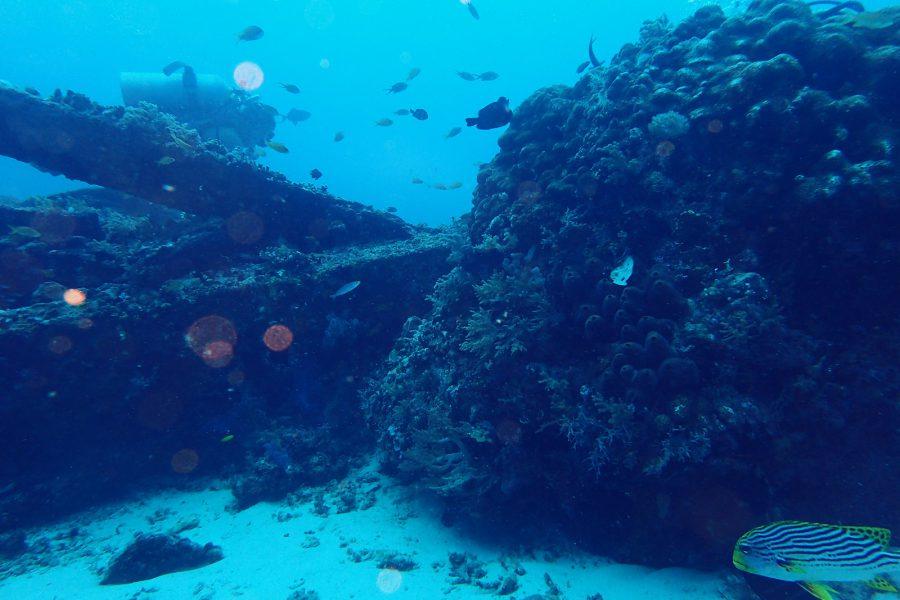 オランゴ島ダイビング_40