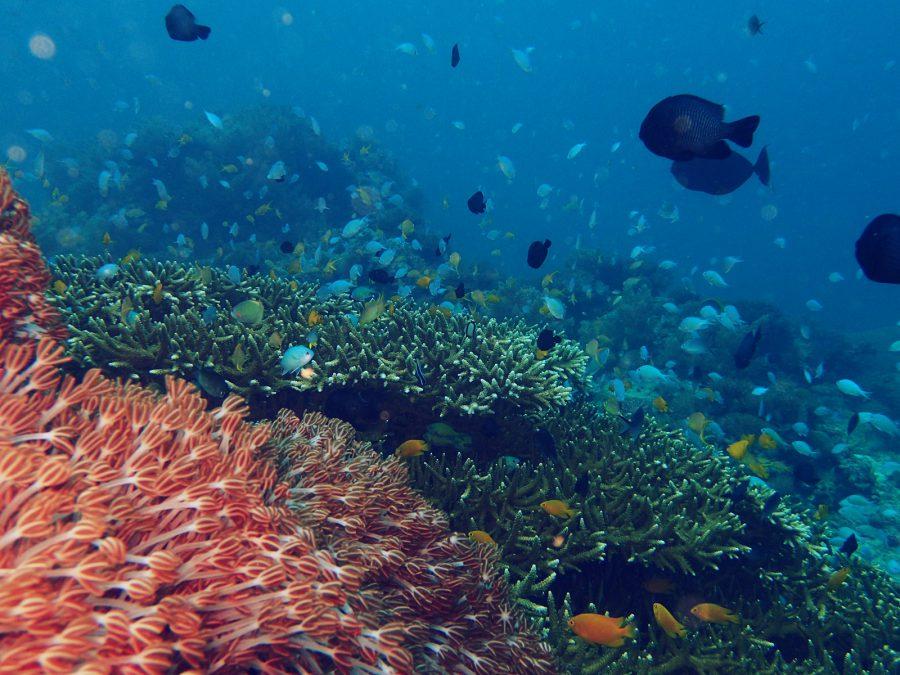 オランゴ島ダイビング_20