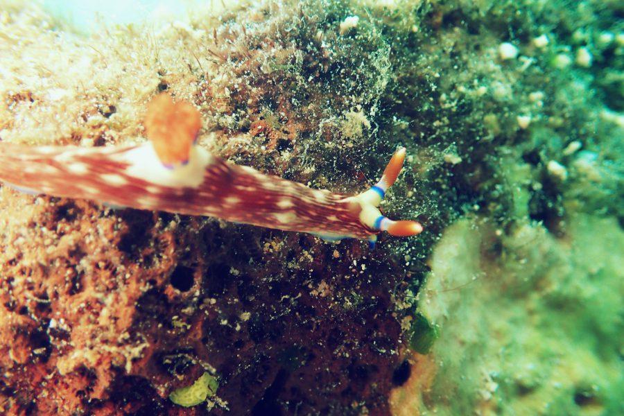 オランゴ島ダイビング_25