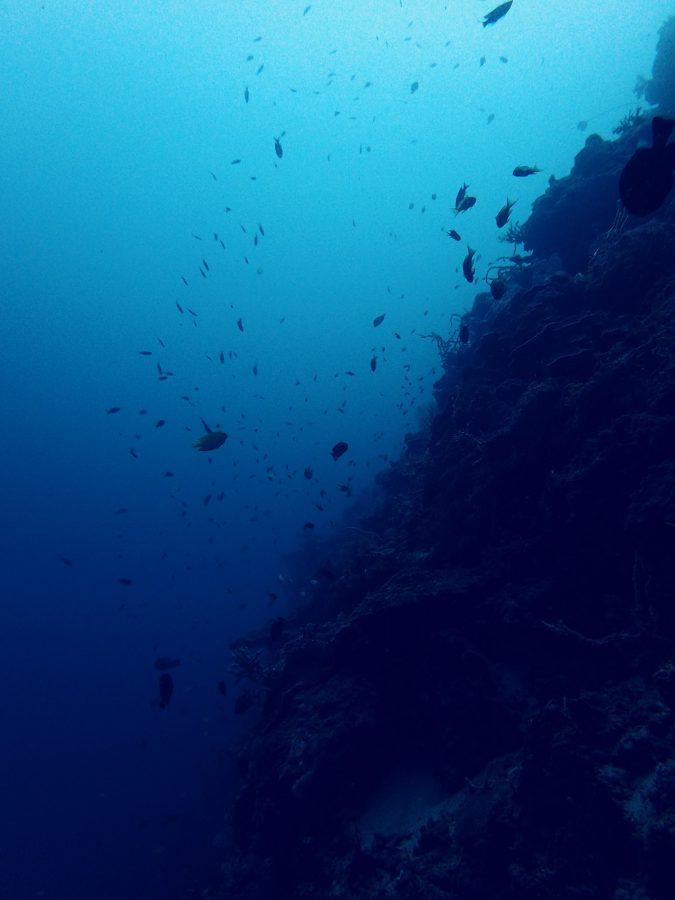 オランゴ島ダイビング_12