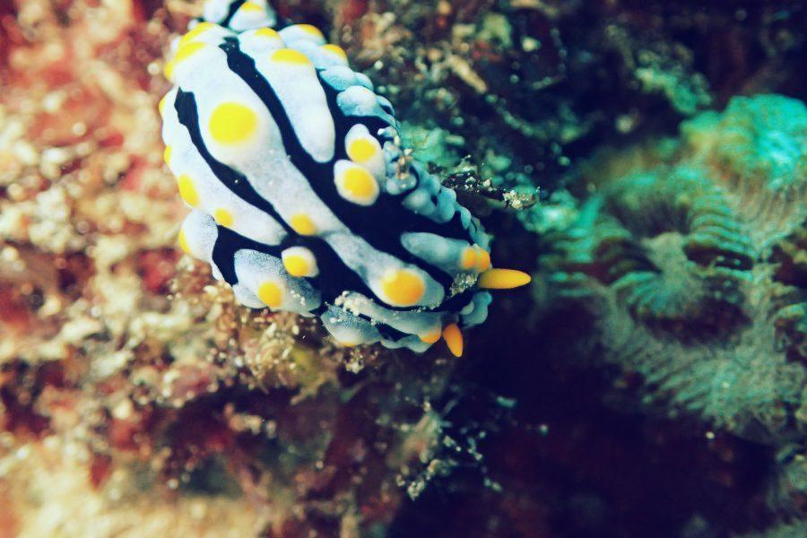 オランゴ島ダイビング_37