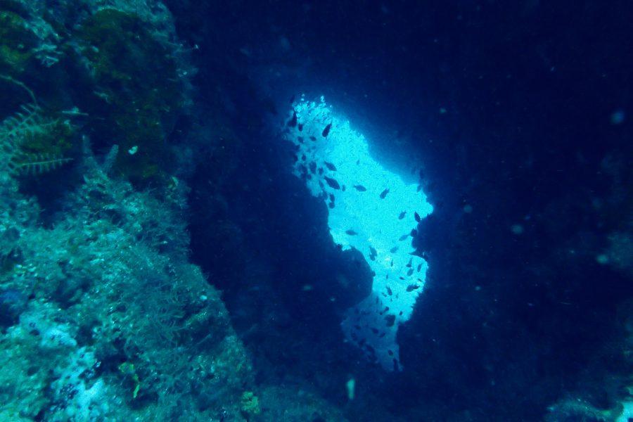 オランゴ島ダイビング_10
