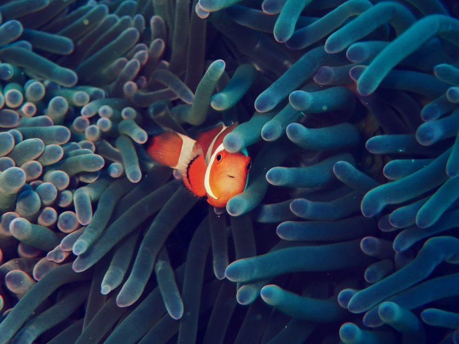 オランゴ島ダイビング_39