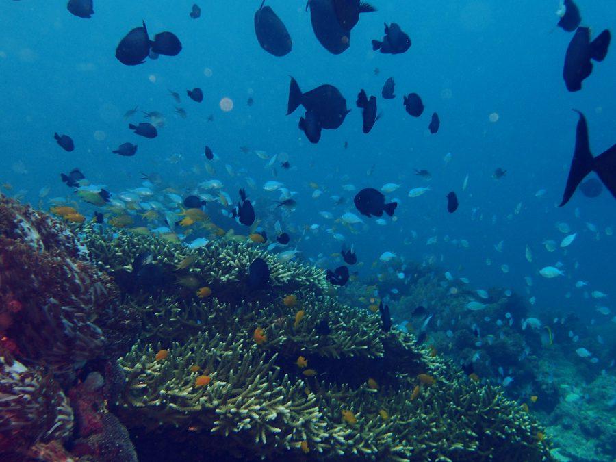 オランゴ島ダイビング_19