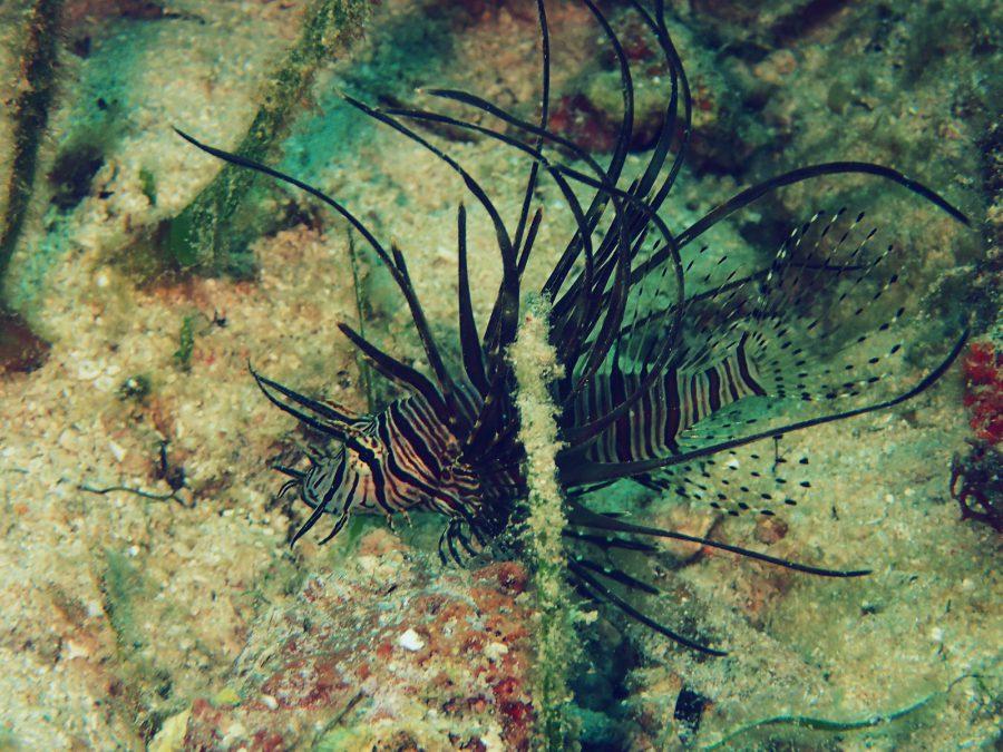 オランゴ島ダイビング_24