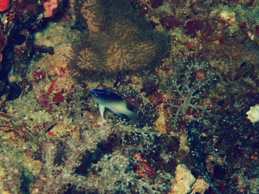 オランゴ島ダイビング_30