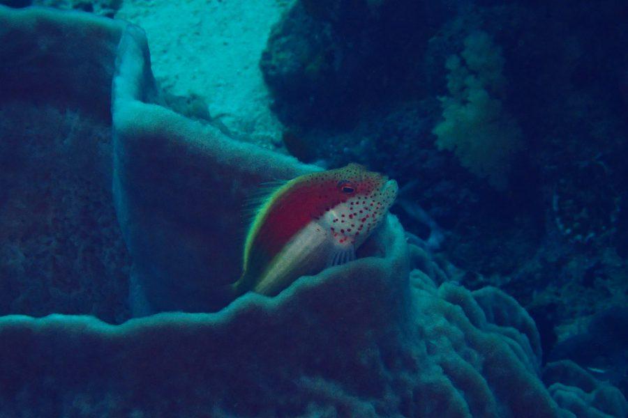 オランゴ島ダイビング_14