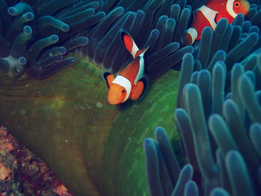オランゴ島ダイビング_38