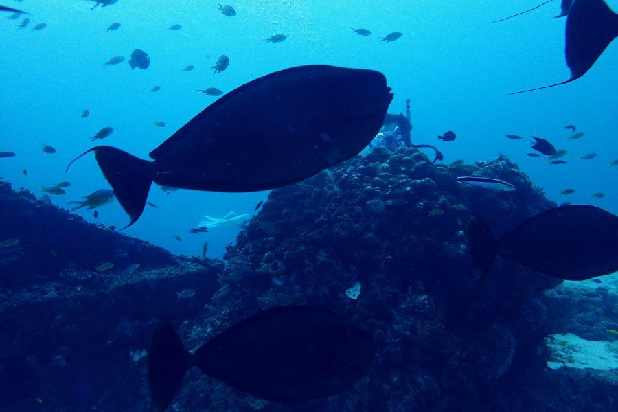 オランゴ島ダイビング_41
