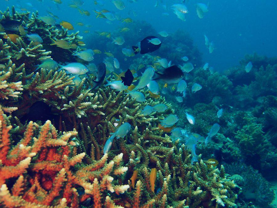 オランゴ島ダイビング_22