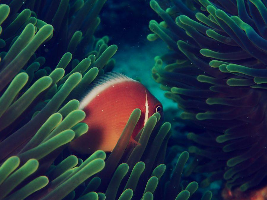 オランゴ島ダイビング_36