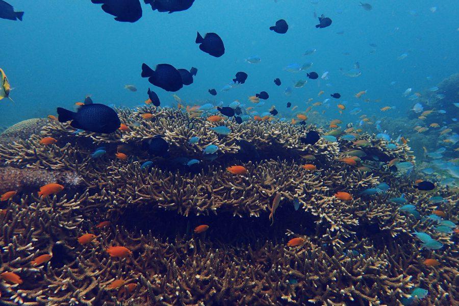 オランゴ島ダイビング_18
