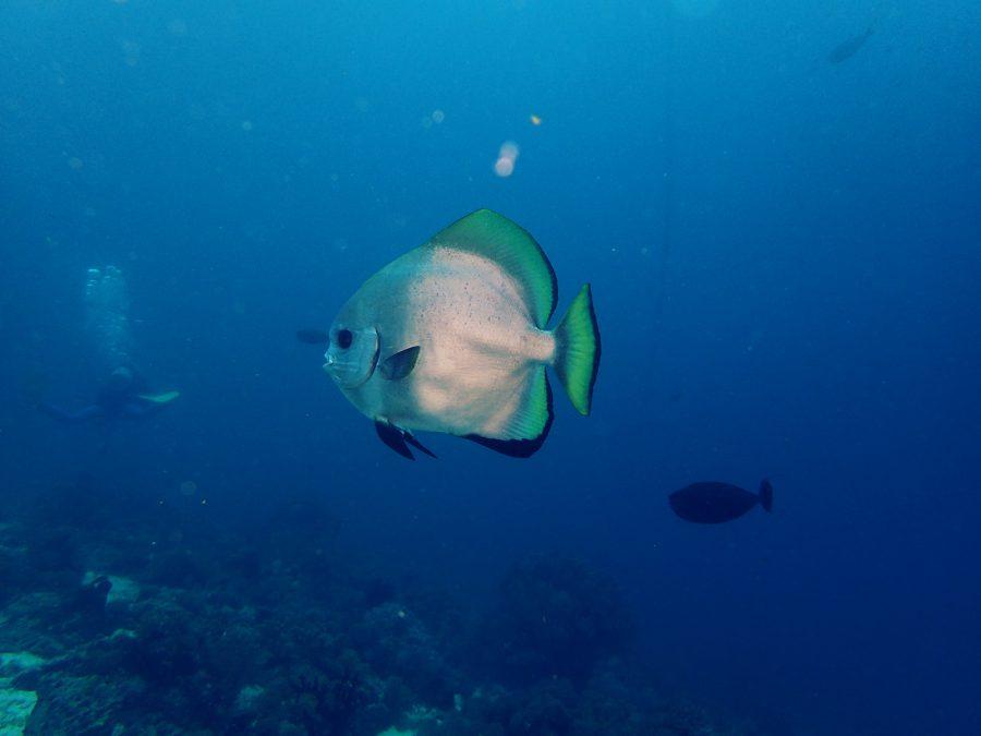 オランゴ島ダイビング_16