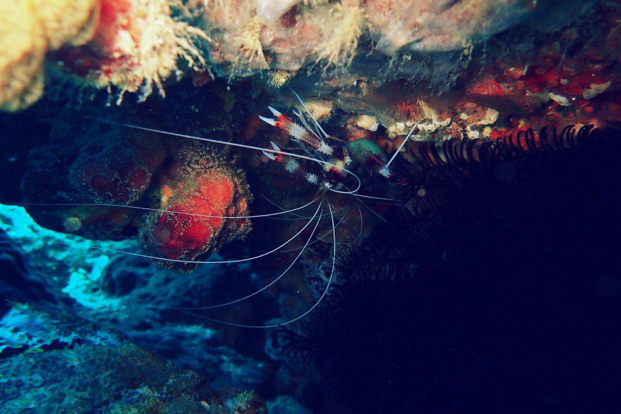 オランゴ島ダイビング_35