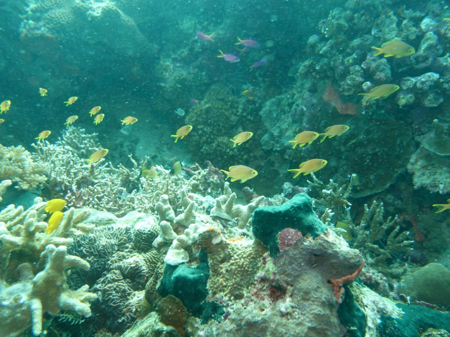 セブ・ヒルトゥガン島ダイビング Cebu,Hilutungan-island diving by Sony RX100m5