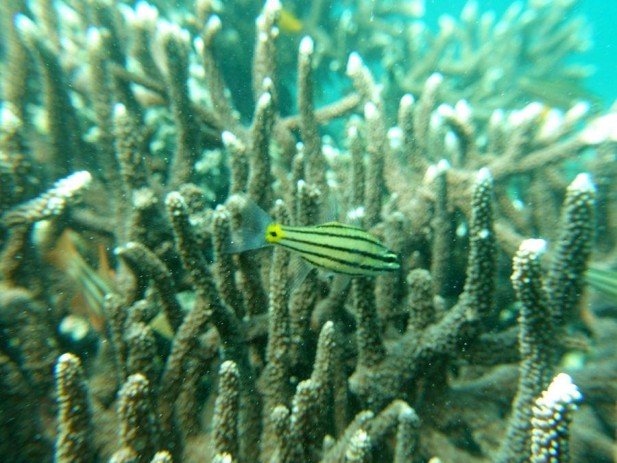 セブ島のダイビングポイント