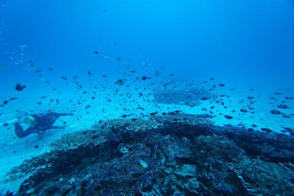 水納島ダイビング_05