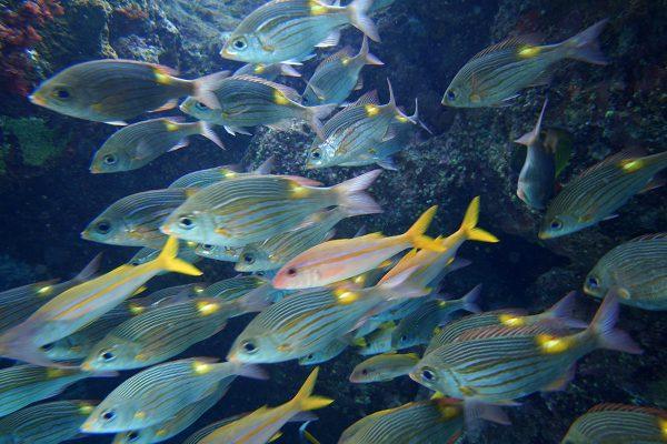 瀬底島ダイビング_34