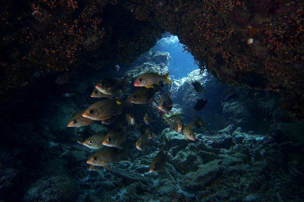 瀬底島ダイビング_36