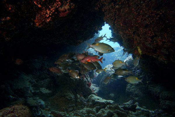瀬底島ダイビング_37
