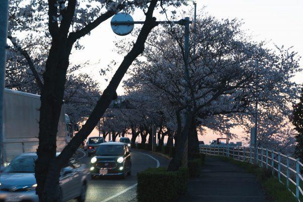 桜と夕日と渋滞とZEISS_21