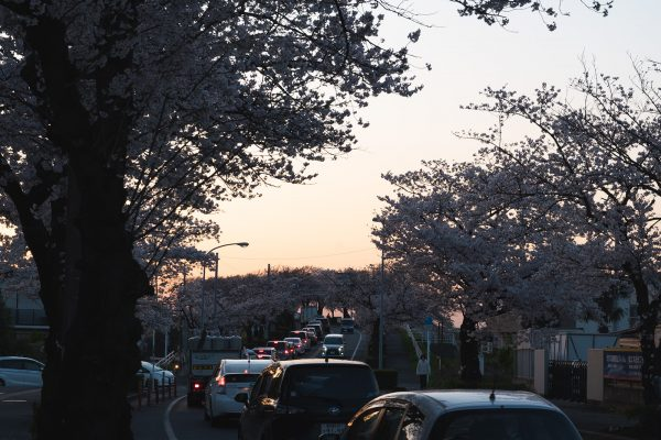 桜と夕日と渋滞とZEISS_07