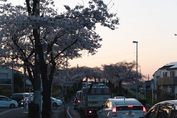 桜と夕日と渋滞とZEISS_08