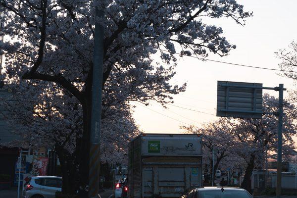 桜と夕日と渋滞とZEISS_06