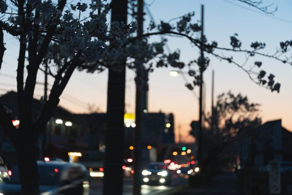 桜と夕日と渋滞とZEISS_24