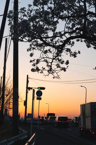 桜と夕日と渋滞とZEISS_13