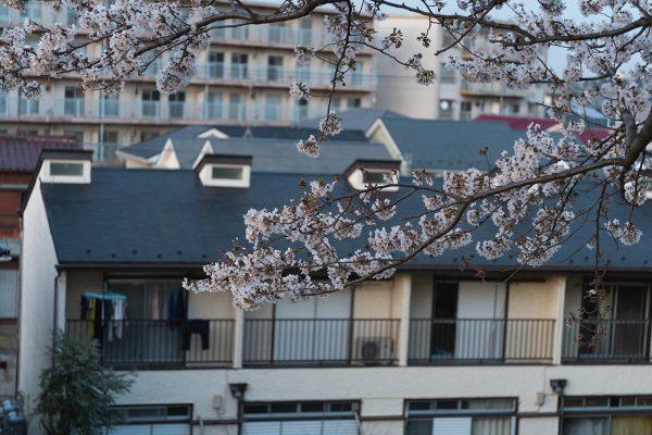 桜と夕日と渋滞とZEISS_15