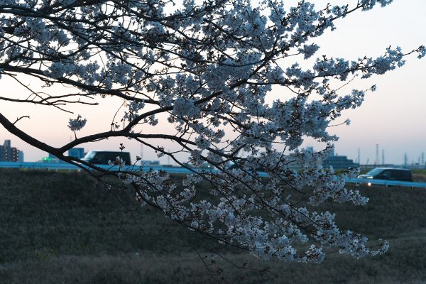 桜と夕日と渋滞とZEISS_18