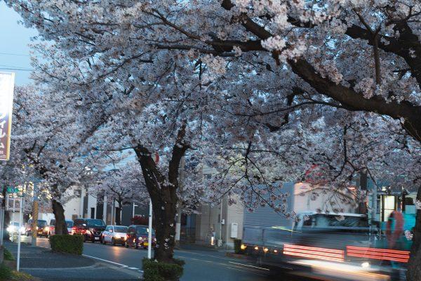 桜と夕日と渋滞とZEISS_23