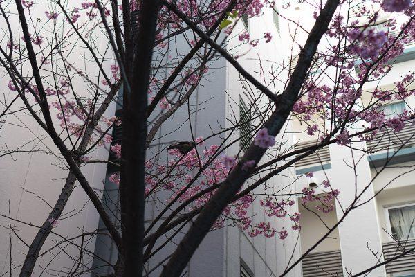 神田・お茶の水散歩_25